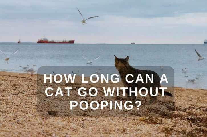 How Long Can a Cat Go Without Pooping