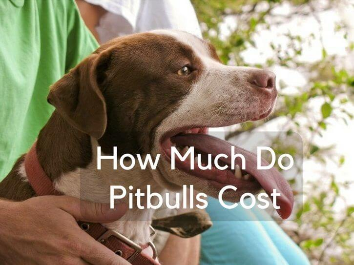 How Much Do Pitbulls Cost? - The Pet Town