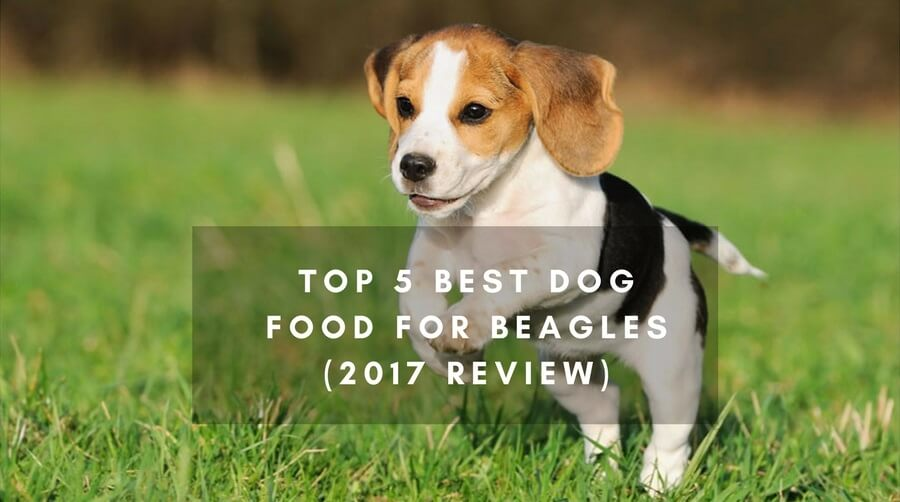 A Beagles Diet Top 5 Best Dog Food Fo...