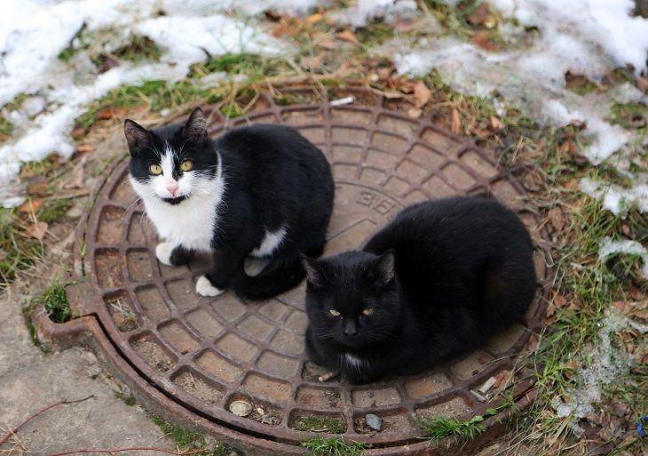 cat alice in wonderland