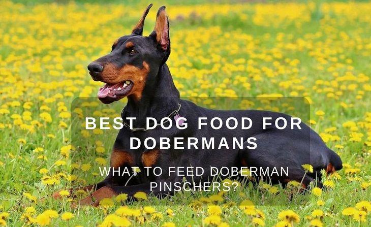 Best Dry Dog Food For Doberman