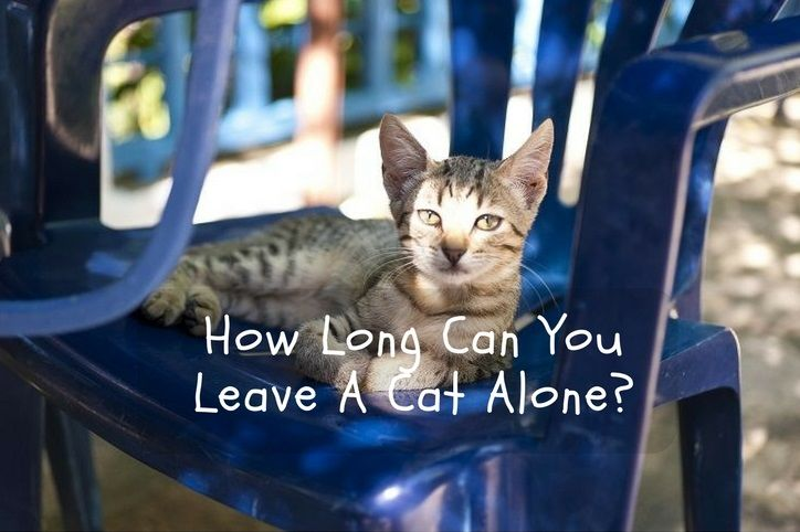 How Long Can You Leave A Cat Alone?