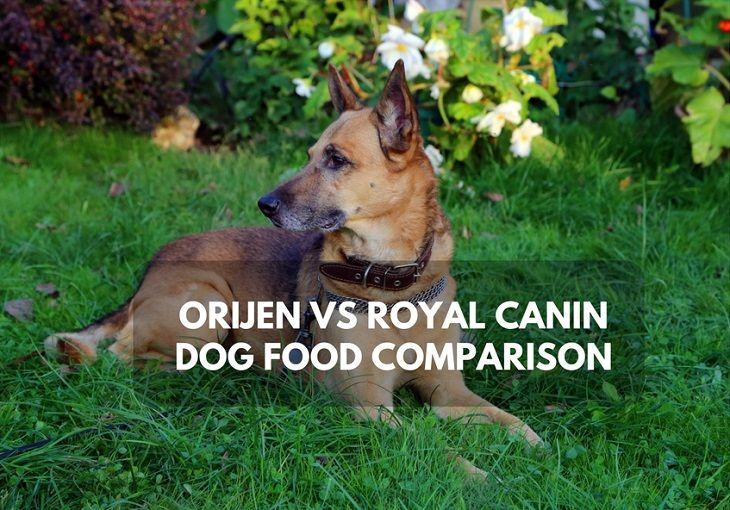 Best Price On Orijen Dog Food