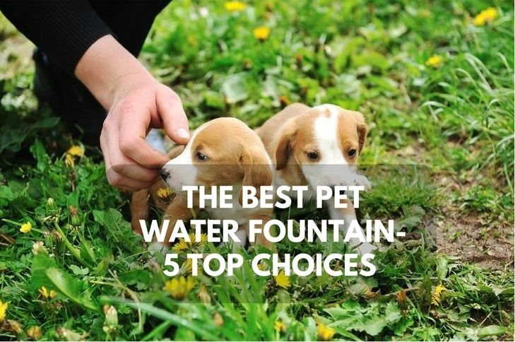 Best Pet Water Fountain