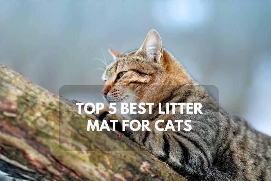 Best Litter Mat for Cats