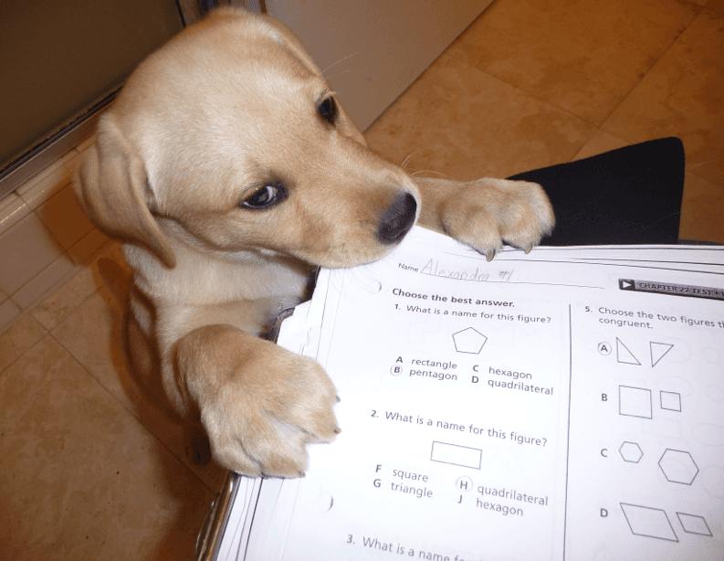 dog essay topics