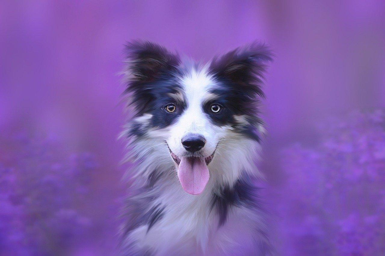 How To Get Affordable Custom Art of Your Pet